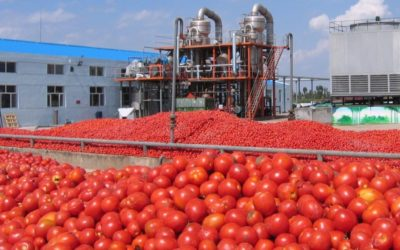 NASCON To Restore Operations In Vegetable Oil, Tomato Paste Plants